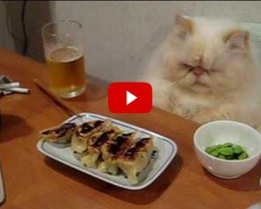 Fancy Cat Eating a Fancy Meal