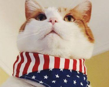 Cat July 4th
