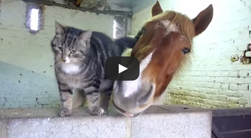 This Horse And Cat May Be The World D Cutest Pair