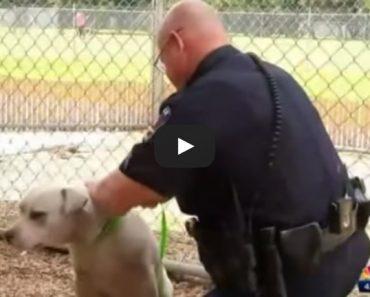 Police Save Dog