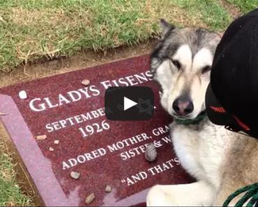 Sad Dog at Graveside