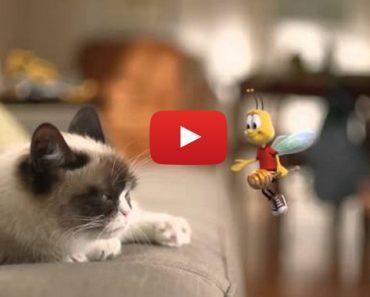 Grumpy Cat and Cheerios