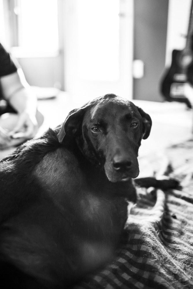 We were serious. - Duke the dog