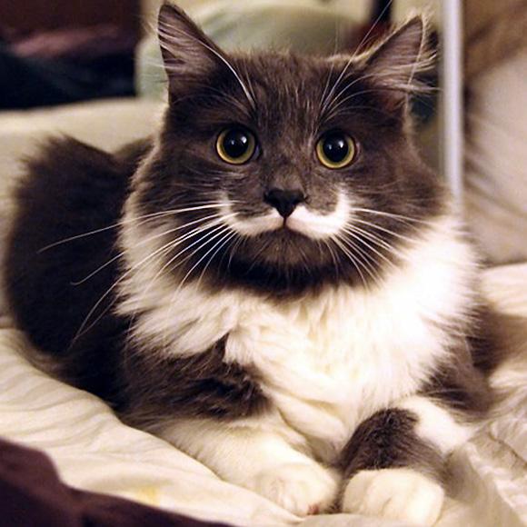 Hamilton-cat