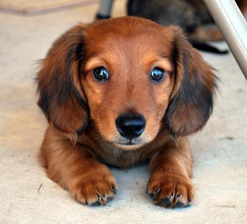 cute-dachshunds-bunkblog.net