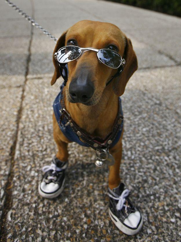 cute-dachshunds-buzzfeed-2