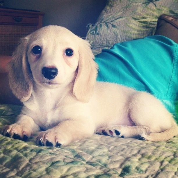 cute-dachshunds-buzzfeed