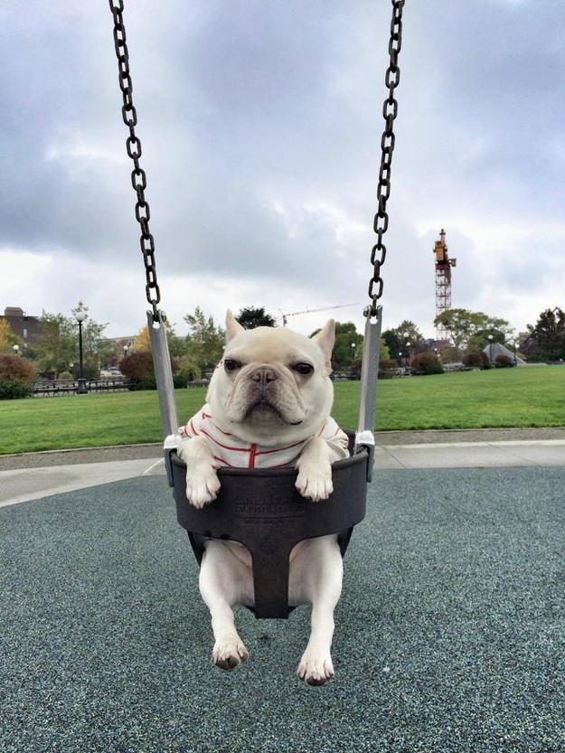 french-bulldogs-facebook-2