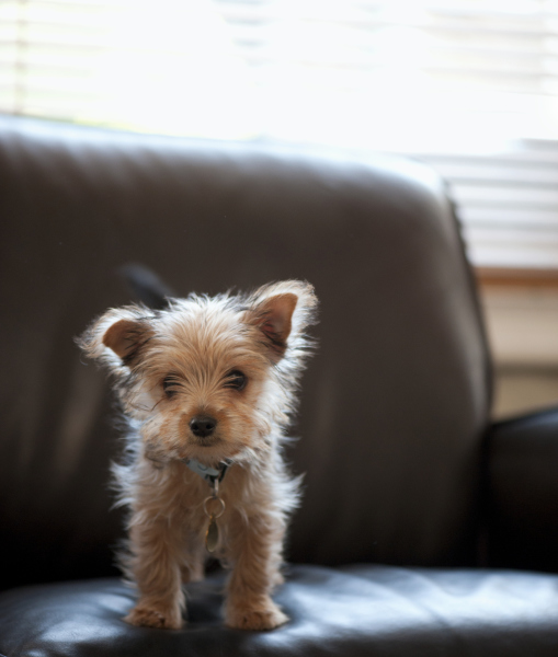 10 Yorkshire Terriers To Brighten Your Day! - I Heart Pets