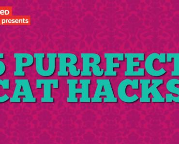 Cat-Hacks-BuzzFeed,jpeg