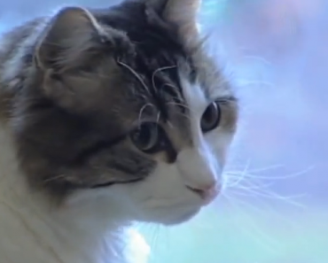 Oscar The Cat Is An Amazing Cat. Truly Unbelievable Story.