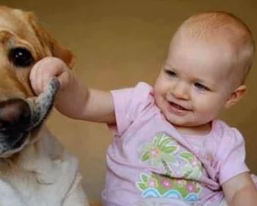 dogs-and-cats-meeting-babies