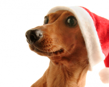 Holiday Hazards Every Pet Owner Should Be Aware Of