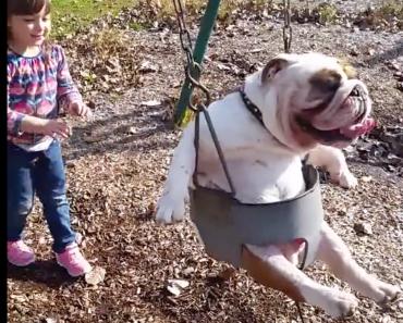 ozzy-english-bulldog-in-a-swing
