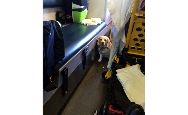 dog-hitches-a-ride-on-an-ambulance