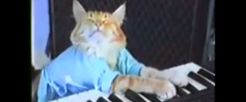 keyboard-cat-charlie-schmidt