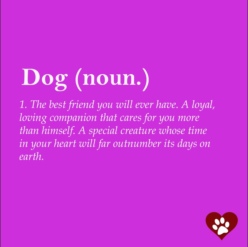 Dog-Definition2