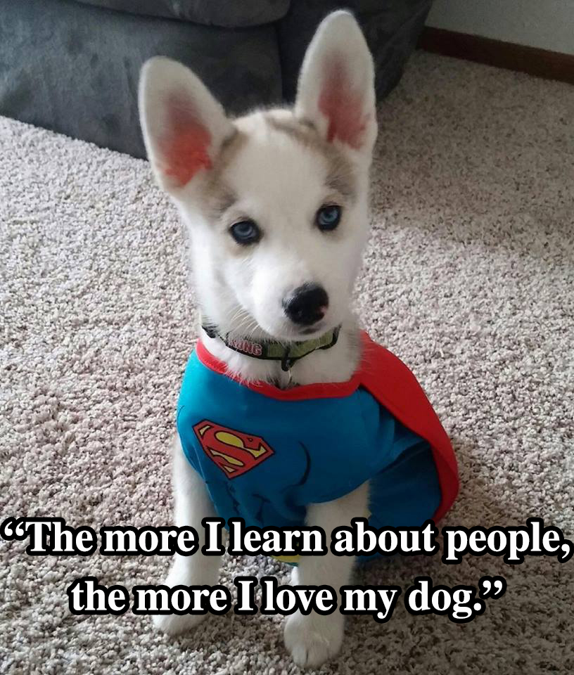 10 Dog Quotes That Will Inspire Any Dog Owner - I Heart Pets