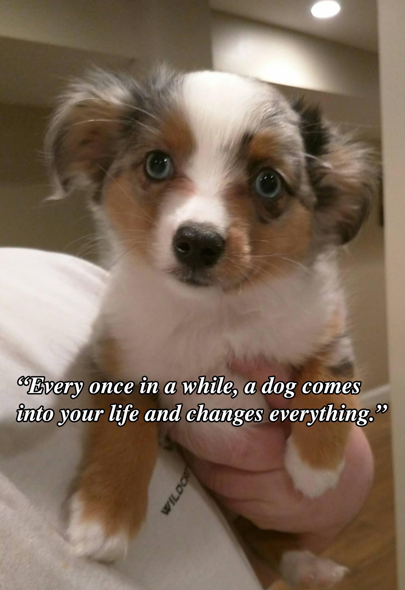 Dog_Quote_7