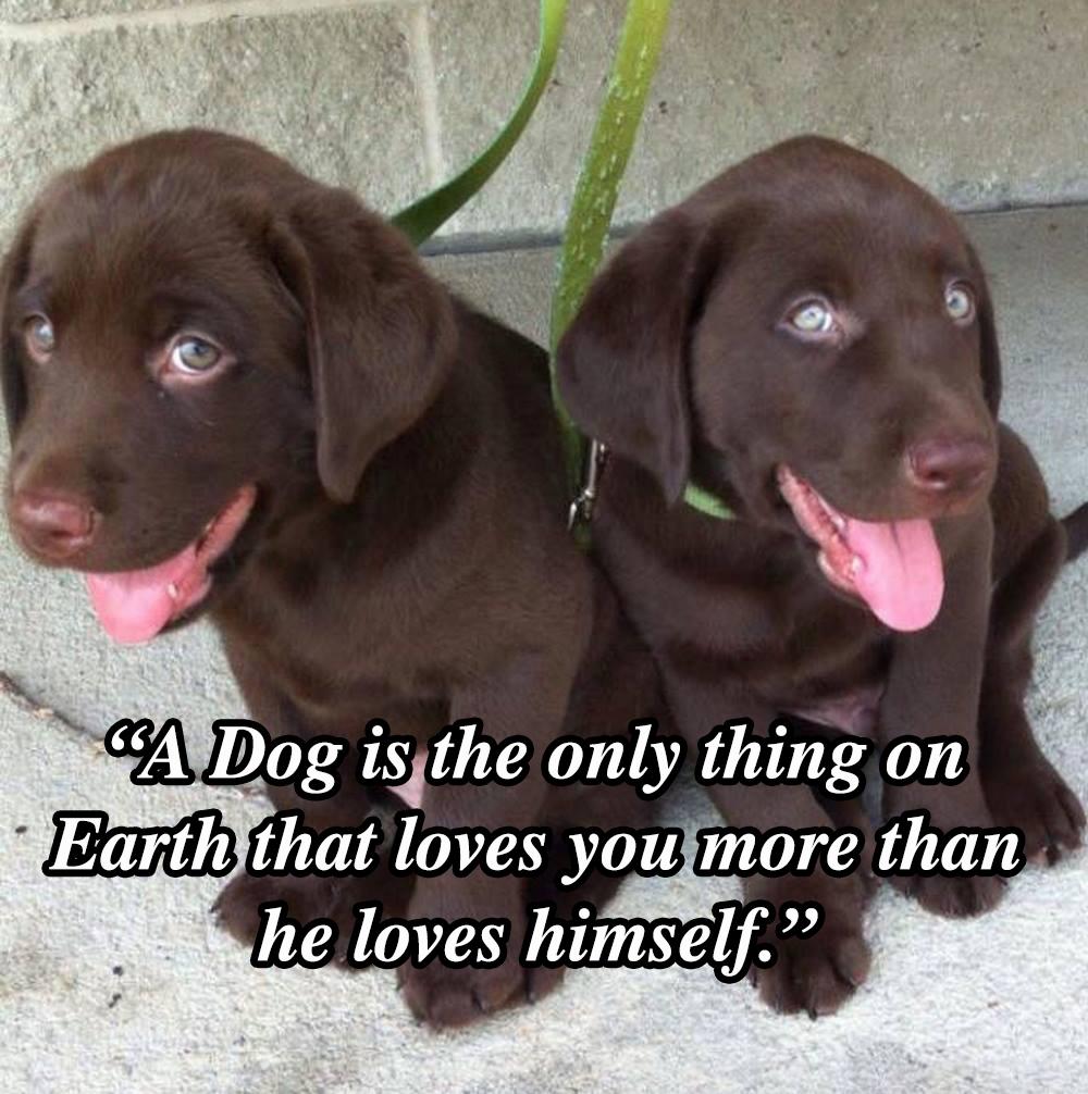 Dog_Quote_9