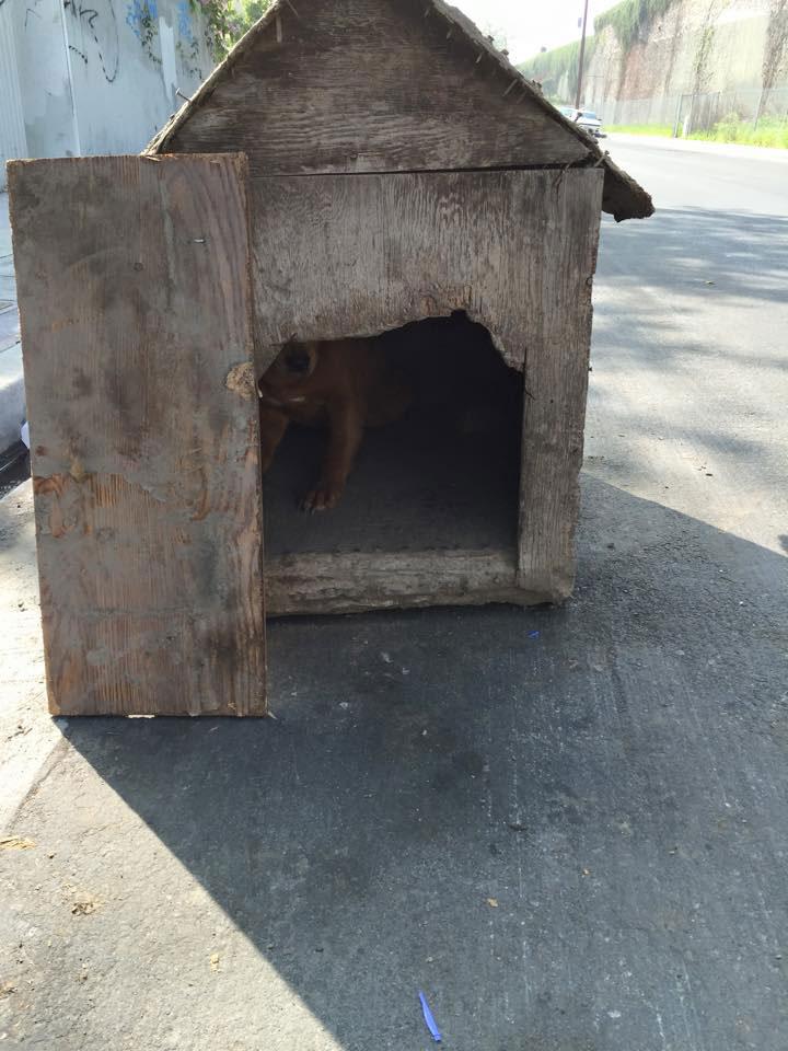 Dog Left Nailed-Up In Dog House