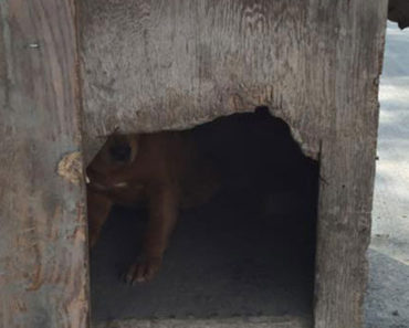 Dog Left Nailed-Up In Dog House