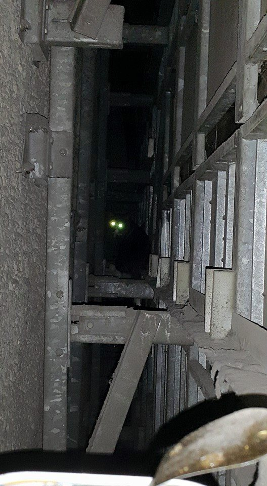 All the rescue workers could see were Biso's glowing eyes in the dark