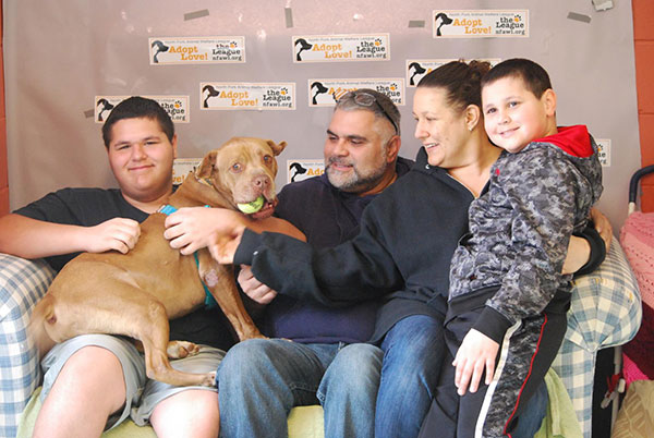 Chester the Pit Bull Is Adopted After 5 Years!