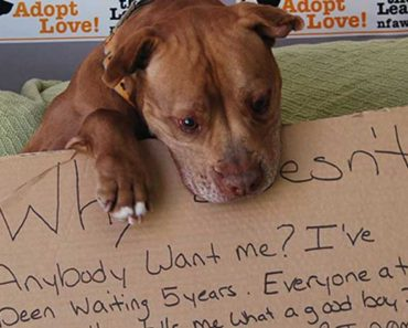 Chester The Pit Bull Waited 5 Years To Be Adopted, Until This Happened
