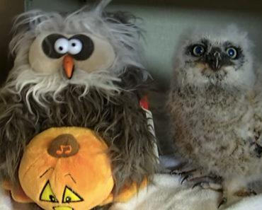 Oakley the Owl Monster Mash