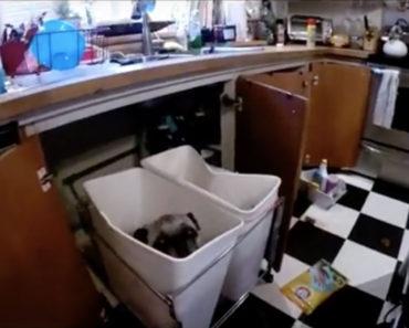 Pug Owner Finds Dog In Trash Can