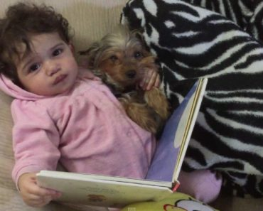 Baby and Puppy Read Bedtime Story