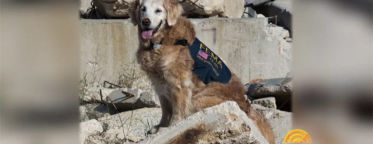 Last Surviving 9/11 Search Dog Dies At Age 16