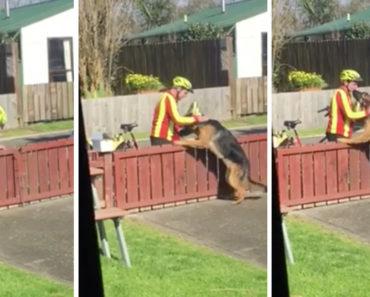 Mailman and Dog