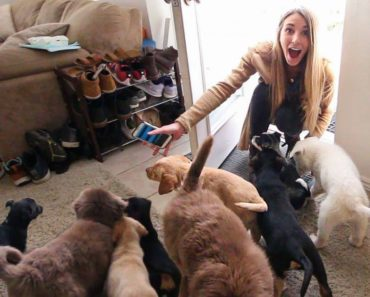 Husband Surprises Wife by Filling House With Puppies