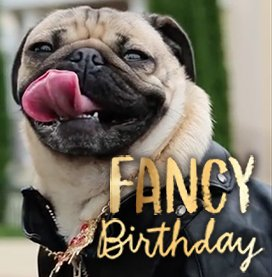 Doug the Pug Fancy Birthday Ecard