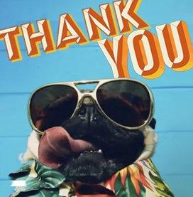 Doug the Pug Gratitude Attitude Ecard