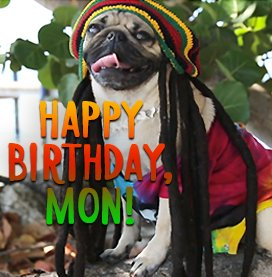 Doug the Pug Reggae Birthday Ecard